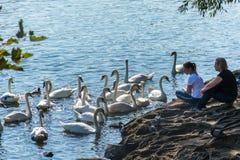 Prague, République Tchèque - 10 septembre 2019 : les gens observent des cygnes à Prague sur la rivière à côté de Charles Bridge photographie stock libre de droits