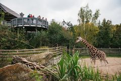 Prague September 26, 2018: Folket eller gruppen av vänner eller gäster av zoo ser giraff i Prague wild afrikanska djur Royaltyfria Foton