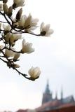 Prague in the spring Stock Photo