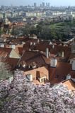 Prague spring, Czech Republic. Roofs in Prague historical center with sakura`s blossom in foreground and skyscrapers in background, Capital of Czech Republic royalty free stock photography
