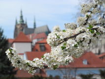 Prague Spring. Stock Photo