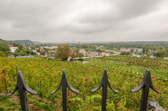 Prague sv. Klara vineyard royalty free stock photo