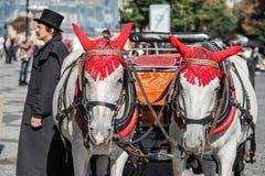 PRAGUE TJECK REPUBLIC/EUROPE - SEPTEMBER 24: Hästar i det gammalt Arkivfoton