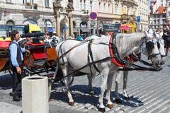 PRAGUE - TJECKIEN, AUGUSTI 14: Hästar som hitching upp i Prague, Augusti 14, 2017 Fotografering för Bildbyråer