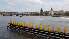 Prague yellow penguins Stock Image
