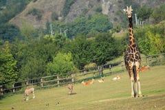 Prague zoo Royalty Free Stock Image