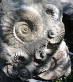 Prague Zoo - ancient ammonite fossils Stock Photography