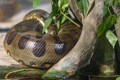 Prague Zoo where we see anaconda. Prague Zoo Water World.Exposure to find anaconda and other animals stock photos