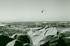 Praia áspera de Nova Zelândia fotos de stock