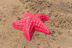 A praia acena a estrela do mar e brinquedos coloridos Fotografia de Stock