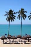 Praia alinhada de Brasil palma tropical Imagem de Stock