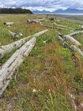 Praia alinhada madeira lançada à costa Imagens de Stock