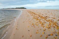 Praia arborizado do leste, NT, Austrália fotos de stock