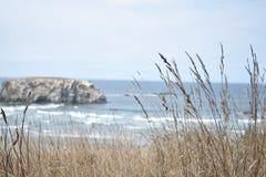 Praia através das ervas daninhas Foto de Stock