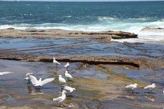 Praia Austrália de Dee Why Foto de Stock Royalty Free