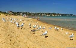 A praia australiana Foto de Stock Royalty Free