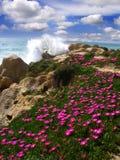 Praia bonita com flores, o Algarve, Portugal foto de stock