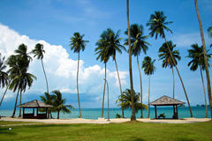 Praia bonita com palmeiras Foto de Stock Royalty Free