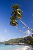 Praia bonita com palmeiras Fotos de Stock Royalty Free