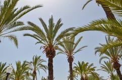 Praia bonita com pedras pretas e areia branca fina na Espanha imagens de stock royalty free