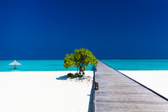 A praia bonita com wodden o molhe e a única árvore em Maldivas Fotos de Stock Royalty Free