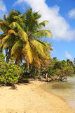 Praia bonita na ilha de Marie Galante, Guadalupe, ilhas das Caraíbas Fotografia de Stock Royalty Free