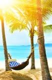 Praia bonita Rede entre duas palmeiras na praia H Fotografia de Stock