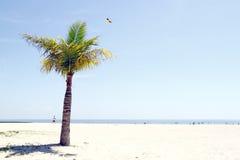 A praia branca. Fotografia de Stock