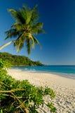 Praia branca bonita da areia com palmeira Foto de Stock Royalty Free