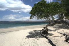 Praia branca da areia com saliência litoral da árvore imagem de stock