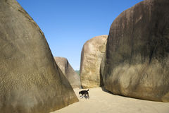 Praia brasileira em Trindade Paraty Brasil com cão fotografia de stock