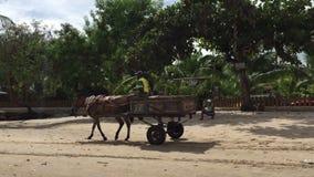 Praia brasileira rústica do cavalo e do carro video estoque