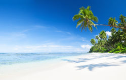 Praia cênico bonita com palmeira Fotos de Stock Royalty Free