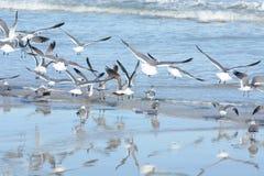 A praia calma explode como o rebanho das gaivotas que todos decolam ao mesmo tempo fotos de stock royalty free