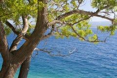 Praia com árvore Fotografia de Stock Royalty Free