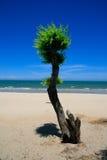 Praia com árvore Foto de Stock Royalty Free