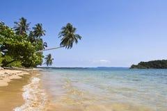 praia com árvore de coco Fotos de Stock Royalty Free