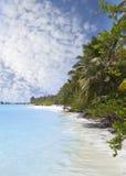 Praia com as árvores no mar ciano maldives fotografia de stock royalty free
