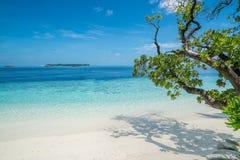 Praia com as árvores no primeiro plano fotos de stock