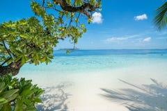 Praia com as árvores no primeiro plano imagens de stock royalty free