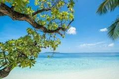 Praia com as árvores no primeiro plano imagem de stock royalty free