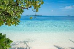 Praia com as árvores no primeiro plano fotos de stock royalty free