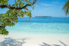 Praia com as árvores no primeiro plano foto de stock royalty free