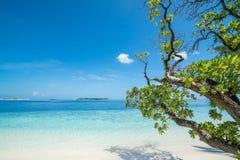 Praia com as árvores no primeiro plano imagem de stock