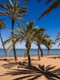 Praia com as palmeiras na Espanha imagens de stock