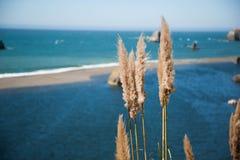 Praia com Cortaderia Selloana fotos de stock
