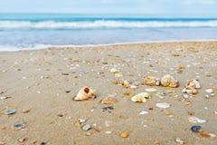 Praia com escudos Fotografia de Stock