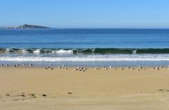 Praia com gaivotas e ondas Mar azul com espuma, dia ensolarado, céu azul Galiza, Spain fotos de stock