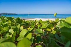 Praia com grama Foto de Stock Royalty Free