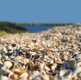 A praia com muitos escudos imagens de stock royalty free